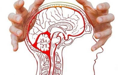 The Gut-Brain Connection: How To Feed Your Brain